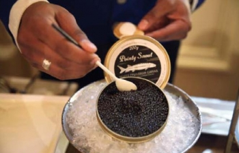 Pointy Snout- The EPN Caviar of Choice